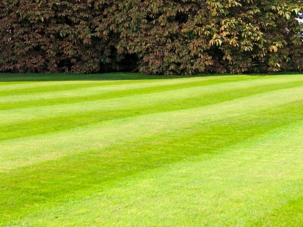 Find a commercial artificial grass installer in Plano, TX